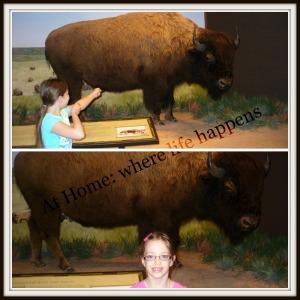 H - buffalo