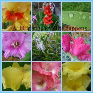I - flowers plants
