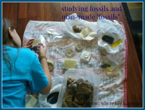 mammoths fossils