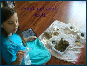 mammoths shark teeth