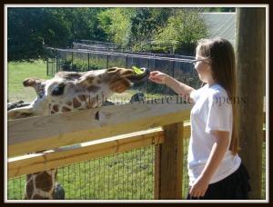 Z feeding giraffes E