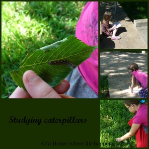 We spent an hour outside one day looking at our surrounding. What we found were many caterpillars, searching for something, though we didn't know what. Maybe they were searching for the