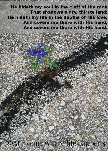 A Wonderful Savior