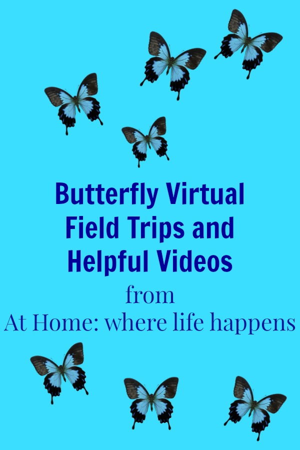 Butterfly Virtual Field Trips
