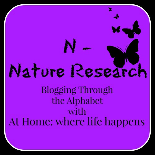 N - Nature Research