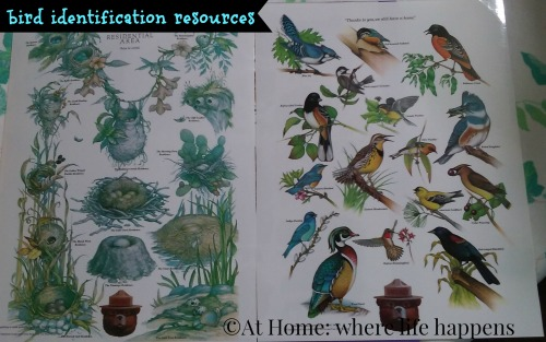 bird identification resources