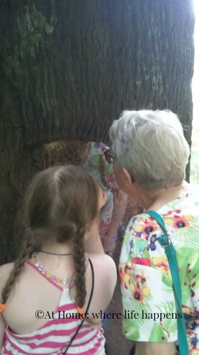 studying the bee tree