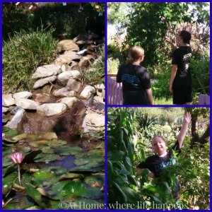 waterfall and butterflies