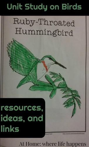 birds unit study